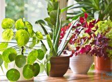 3 Ciri Tanaman Anda Berhasil Tumbuh Subur dan Sehat